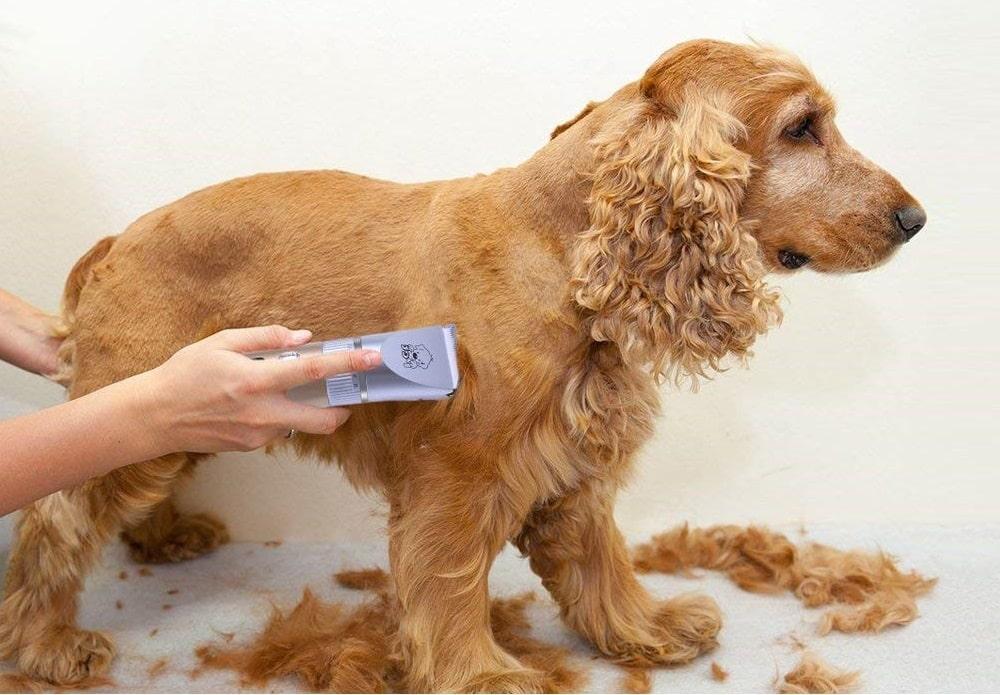 tondeuse pour chien